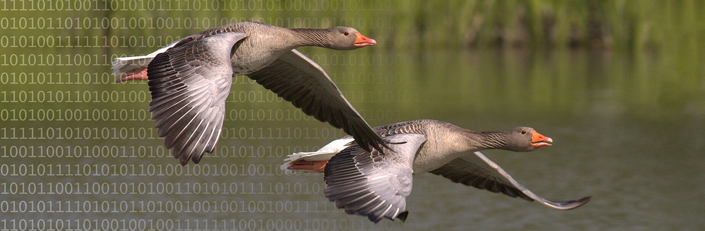 Data Geese